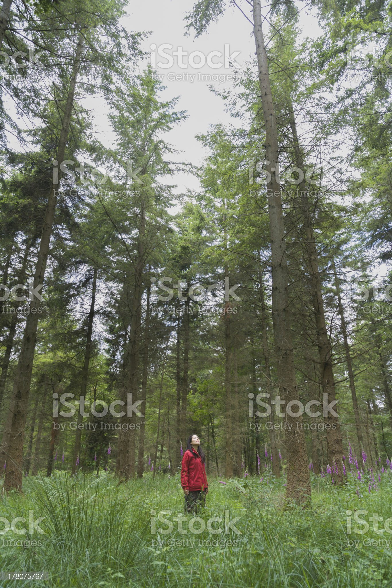 Young woman standing in forest Vertical royalty-free stock photo