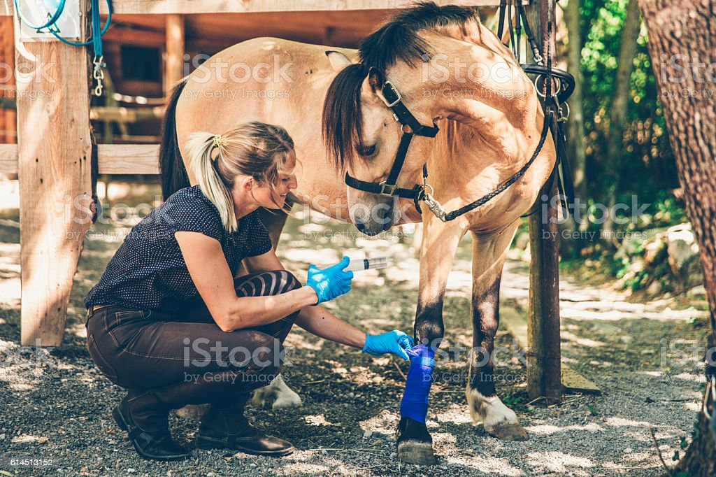 Young Woman Taking Care of her Horse Injury stock photo