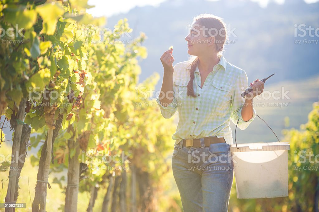 Young Woman Tasting White Ripe Grapes stock photo