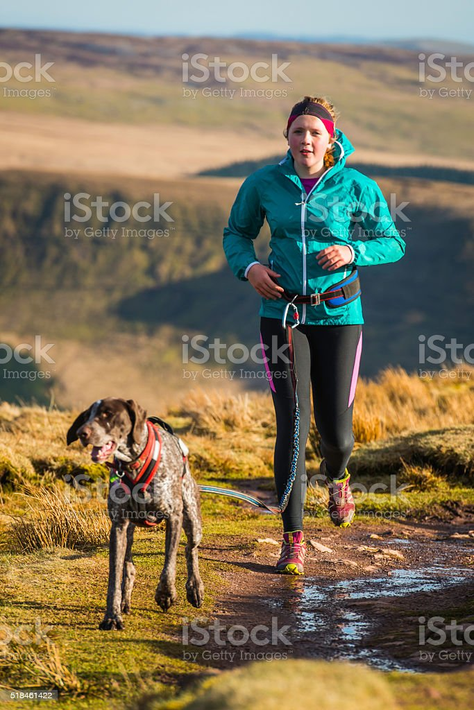 Young woman trail running on mountain ridge with canicross dog stock photo