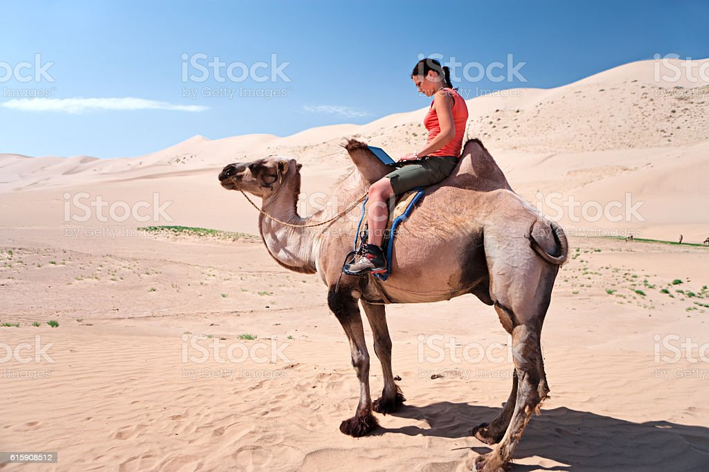 Young woman using a laptop on the camel stock photo