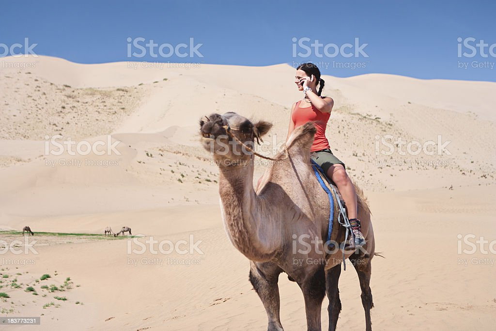 Young woman using phone on the camel royalty-free stock photo
