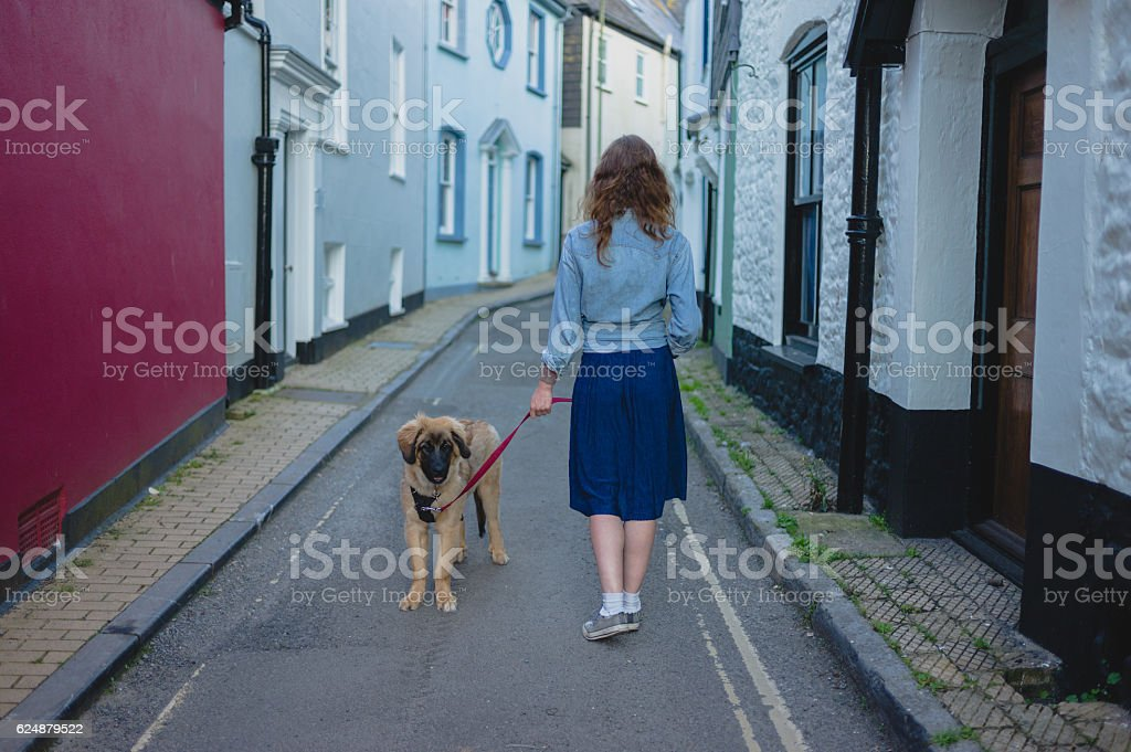 Young woman walking Leonberger puppy stock photo