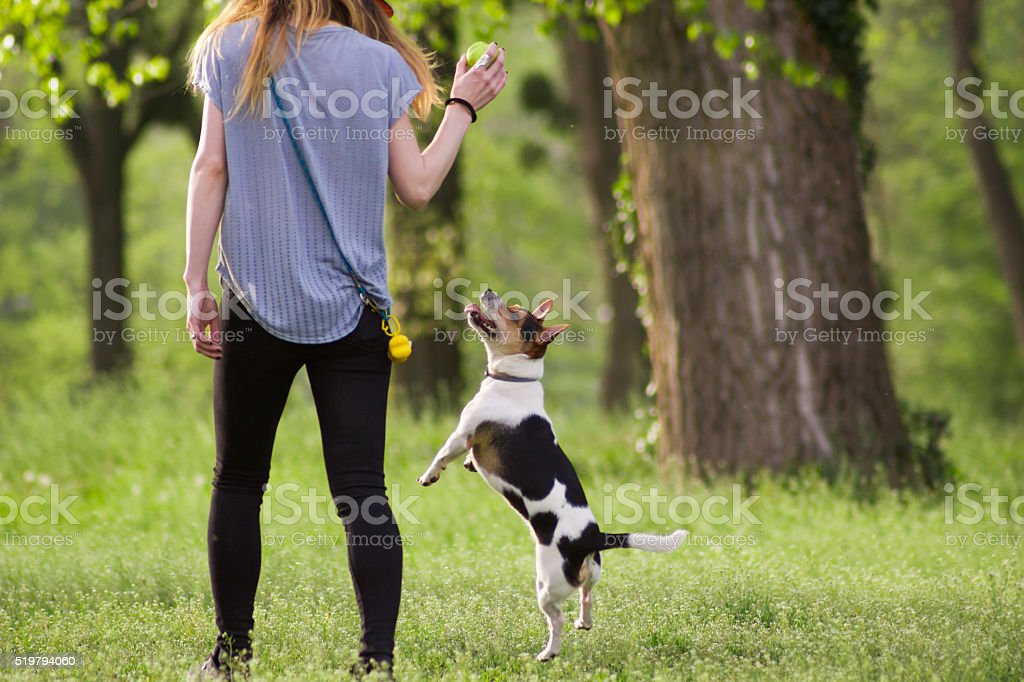Young woman walking with dog playing training in the park stock photo