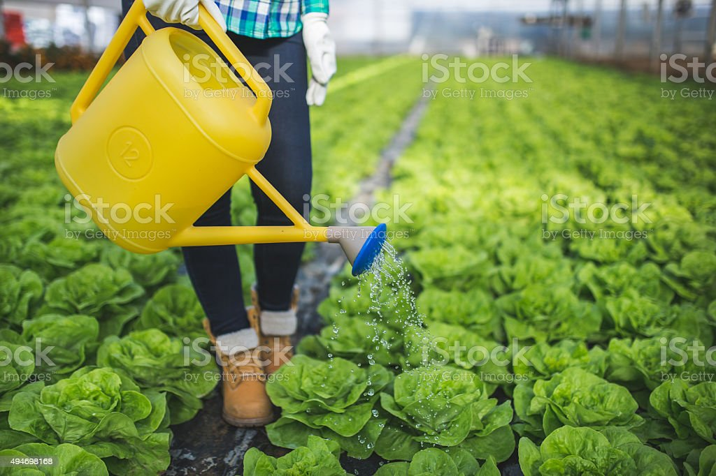 Young woman watering plants in glasshouse stock photo