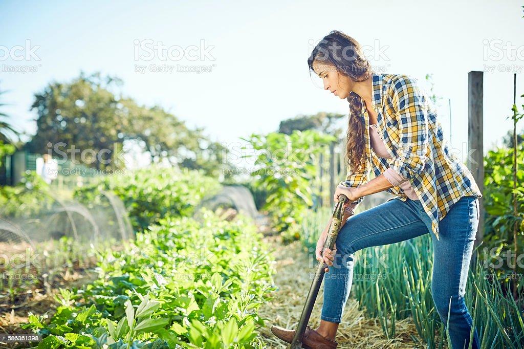 Young woman weeding in organic field stock photo