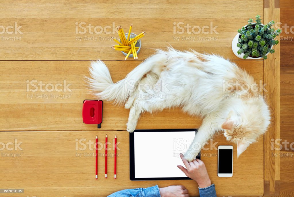 Young woman with cat touching digital tablet on wooden table stock photo