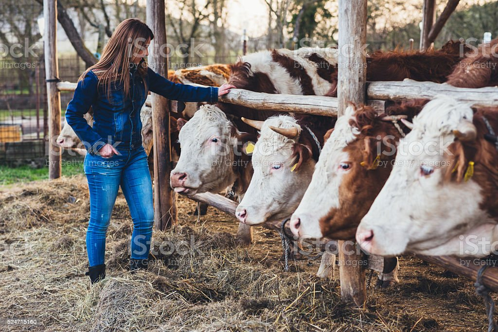 Young woman with Cattles in the Farm stock photo