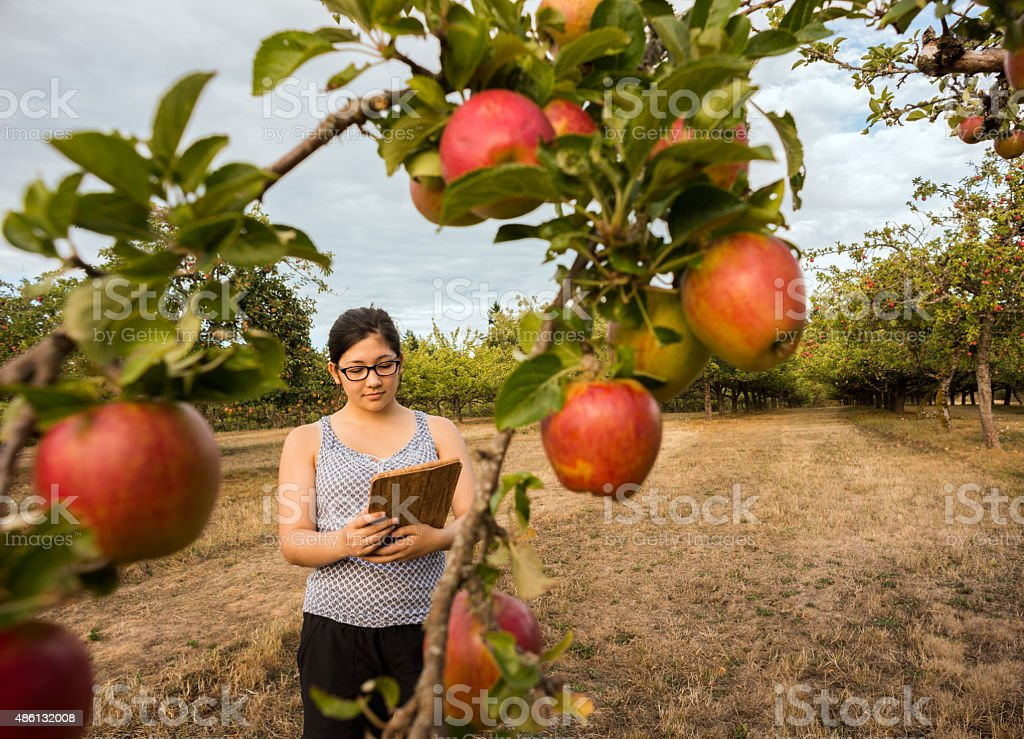 Young Woman with Computer Tablet Examining Apple Trees in Orchard stock photo