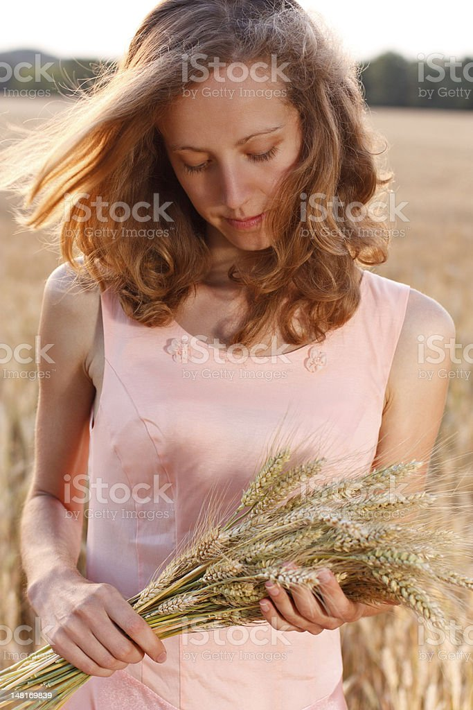 Young woman with ripe spikelets of wheat in the hands royalty-free stock photo