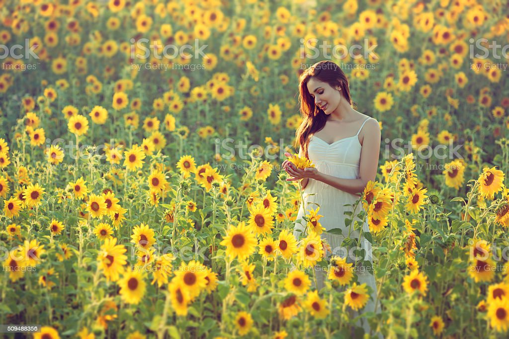 Young woman with sunflowers stock photo