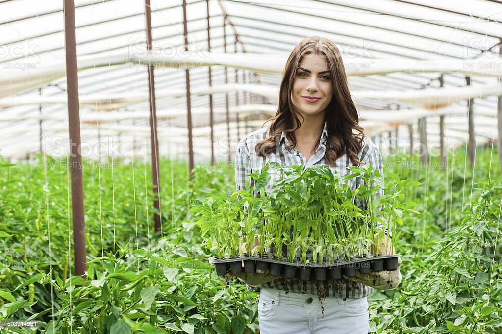 Young woman working in a greenhouse stock photo