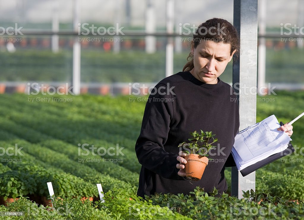 Young woman working in greenhouse. royalty-free stock photo
