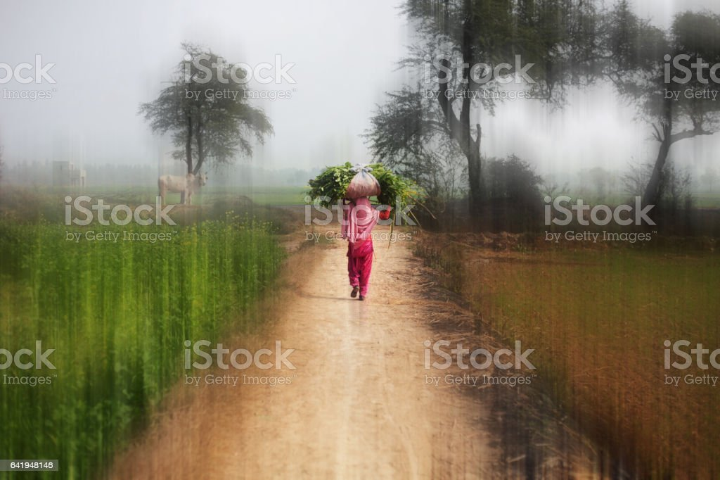 Young women with carrying silage for domestic cattle stock photo