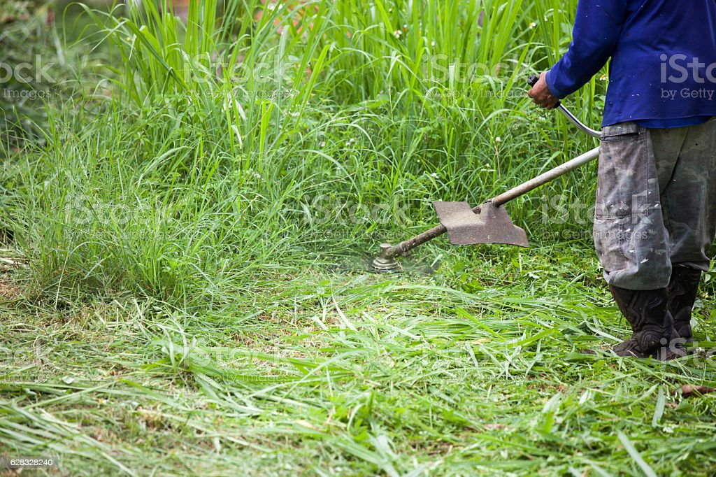 Young worker cut the grass with power mower stock photo