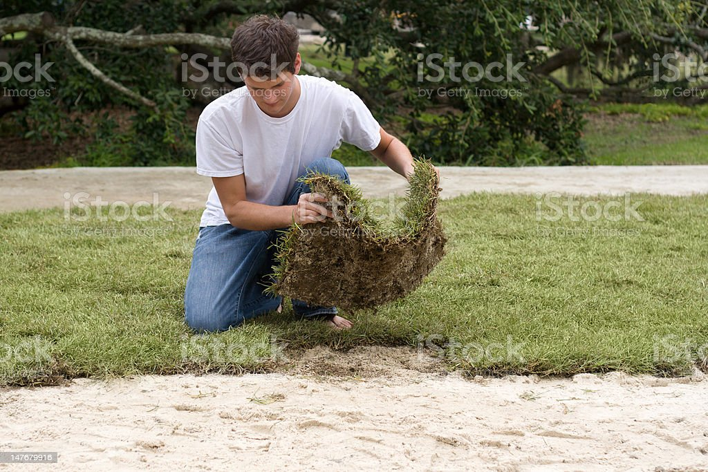 Young Worker Laying Sod royalty-free stock photo