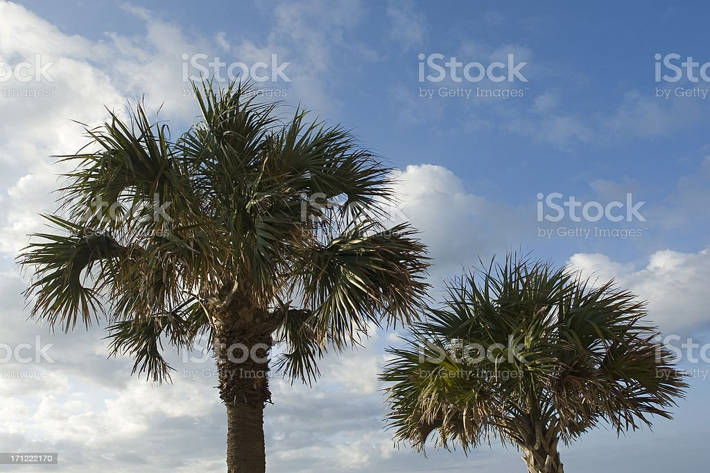 Your Basic Palm Trees royalty-free stock photo