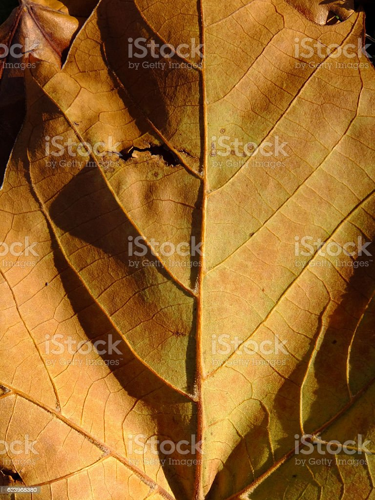 Your Inner Leaf stock photo