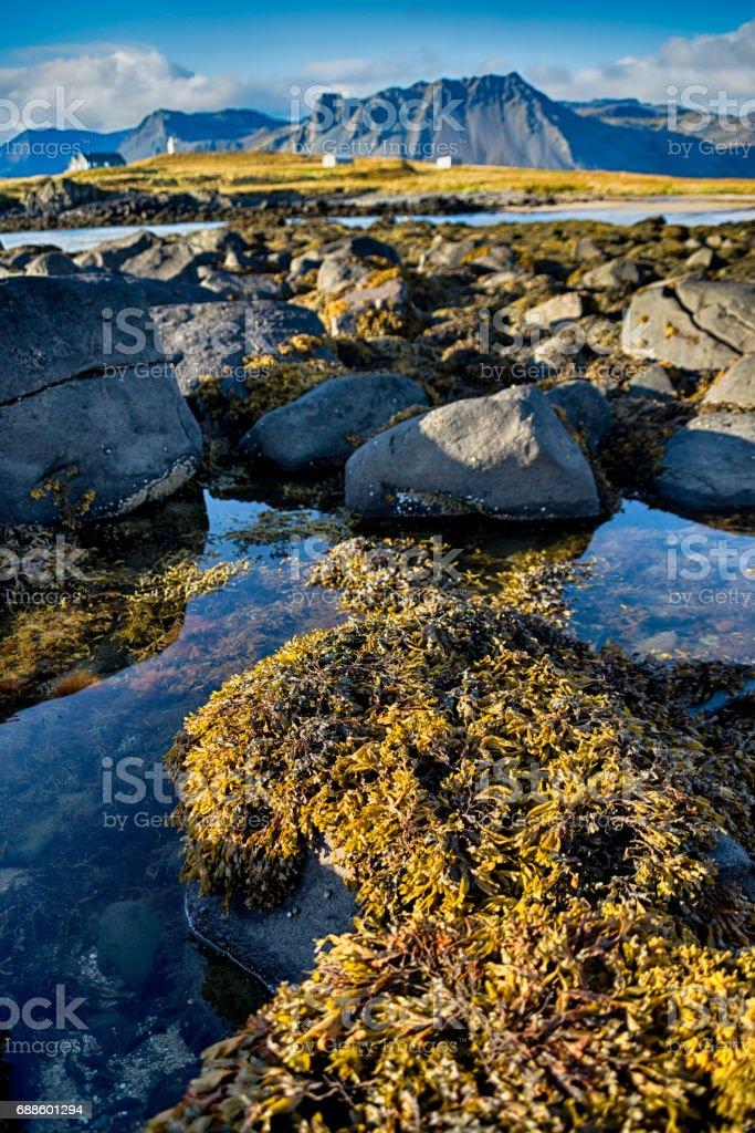 Ytri Tunga in Iceland stock photo