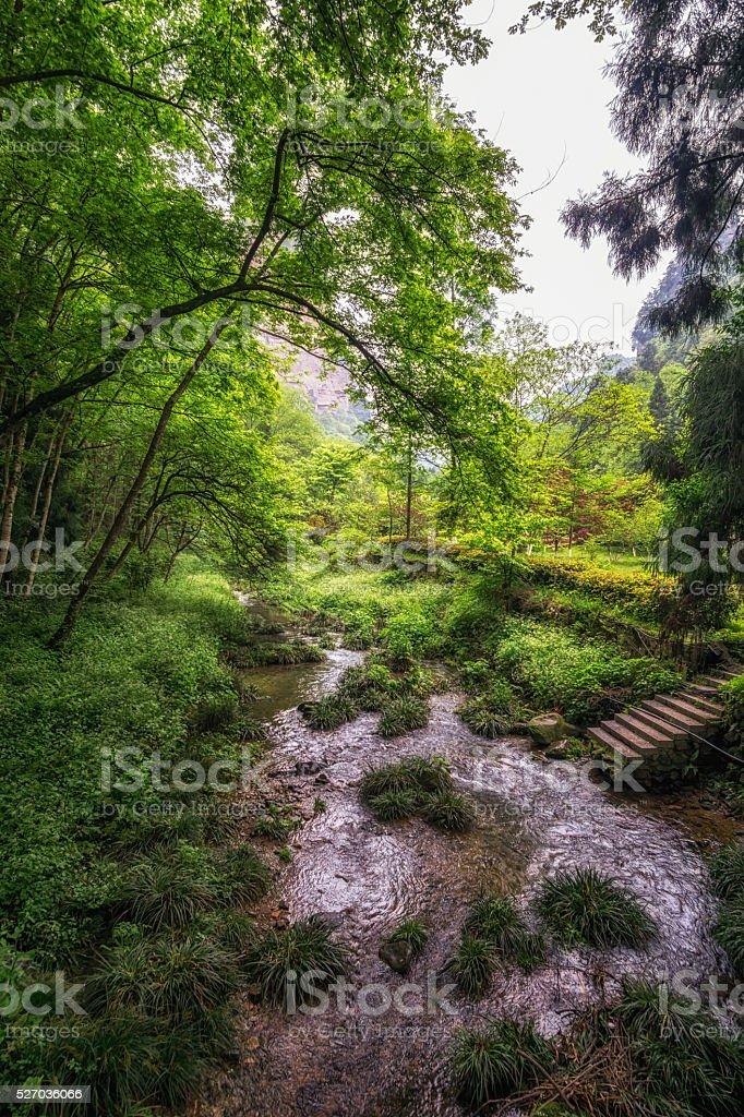 yuanjiajie scenic area stock photo