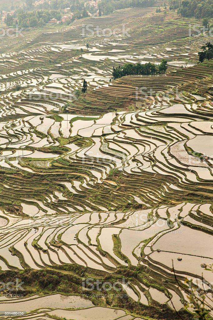 Yuanyang rice terraces of Yunnan China in spring stock photo