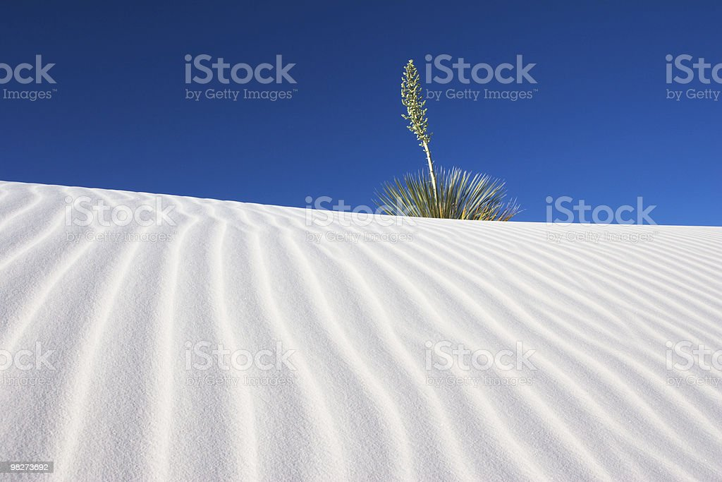 Yucca and White Sands stock photo