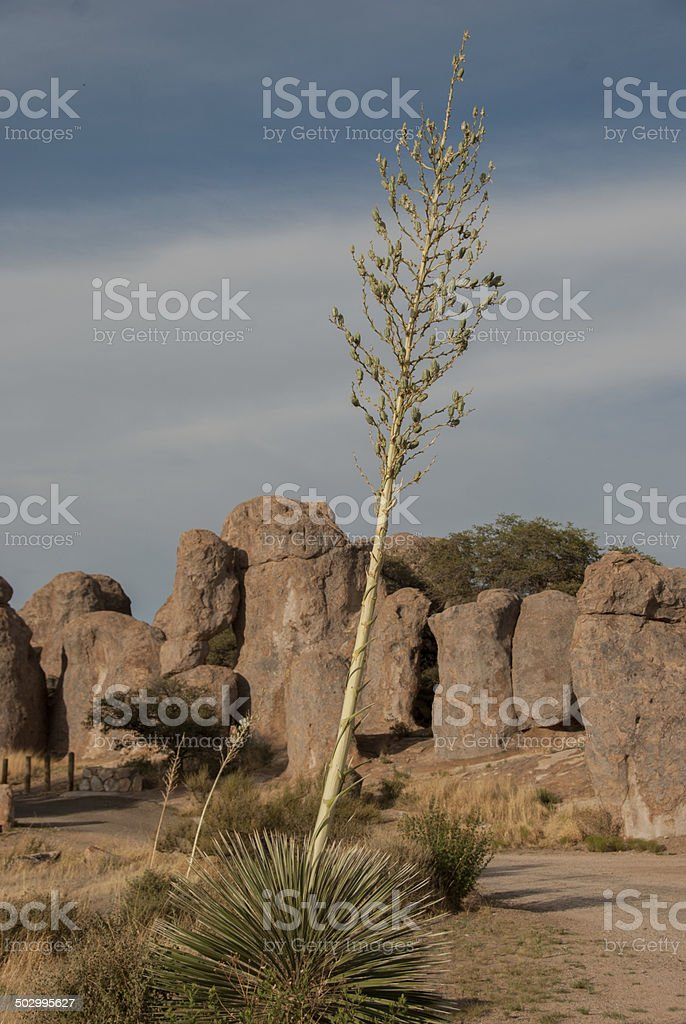 Yucca at City of Rocks in New Mexico royalty-free stock photo