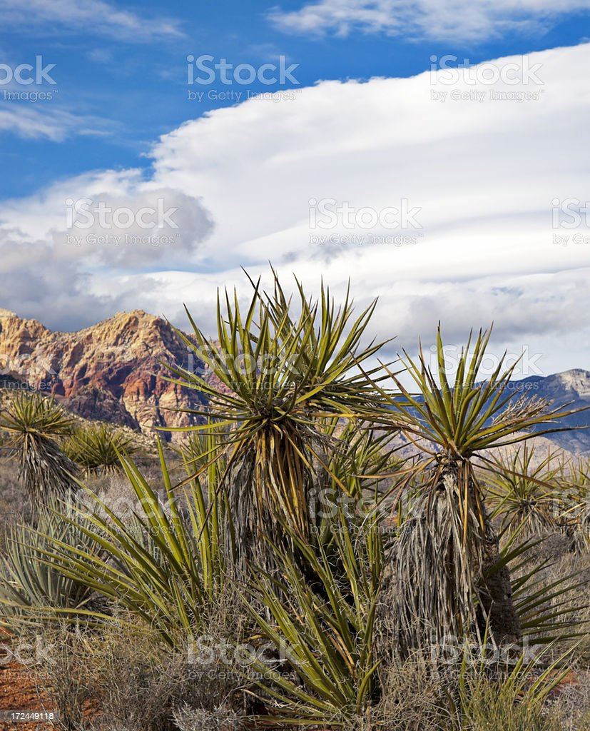 Yucca at Red Rock royalty-free stock photo