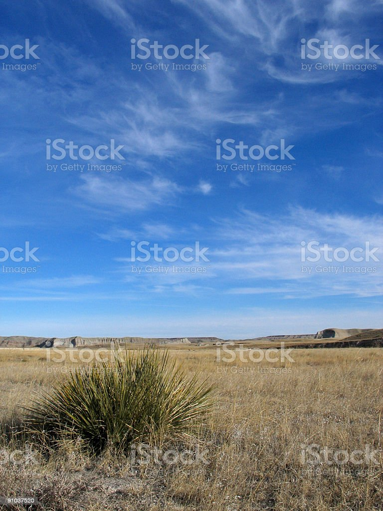 yucca on the praries royalty-free stock photo