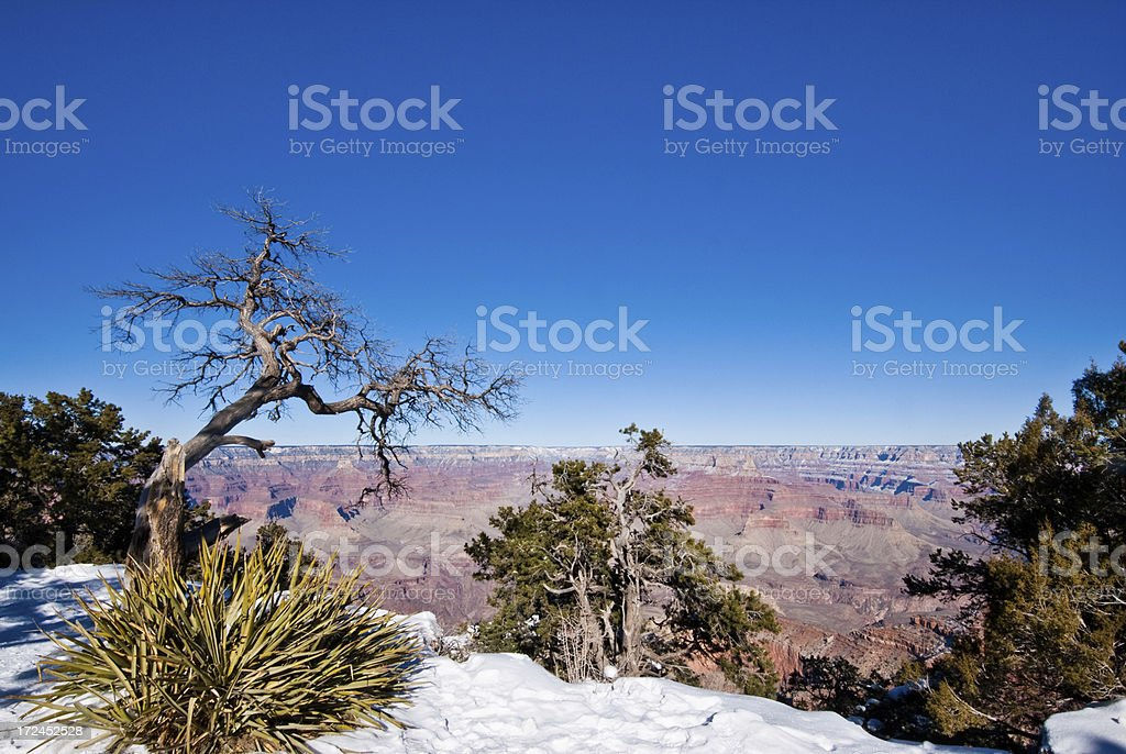 Yucca Plant on the Canyon Rim royalty-free stock photo