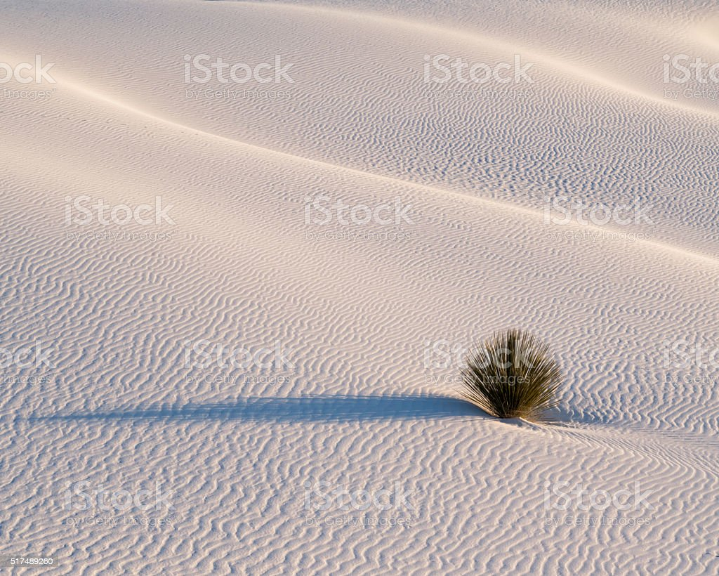 Yucca Plant White Sands Sunrise stock photo