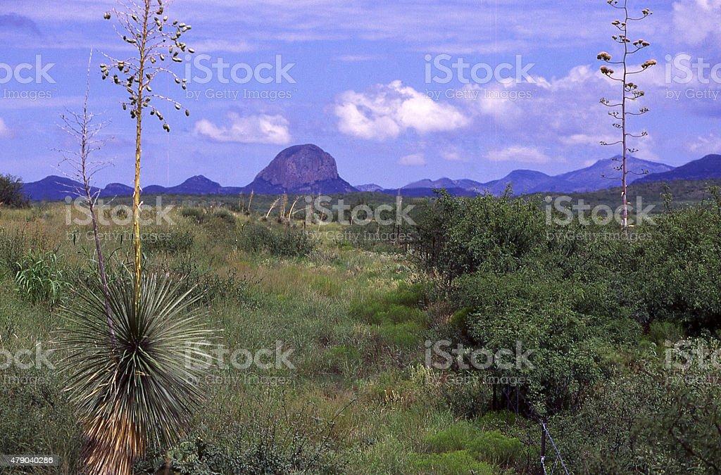 Yucca Plants desert landscape Chiricahua Apache Reservation southeast Arizona stock photo