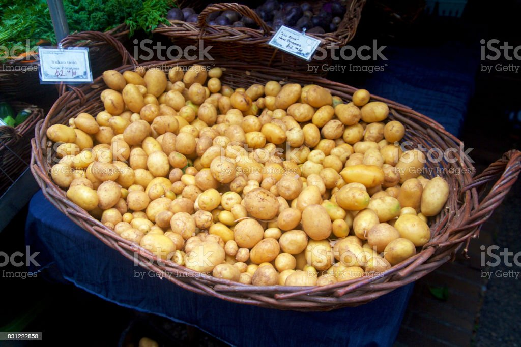 yukon gold new potatoes at the farmer's market stock photo