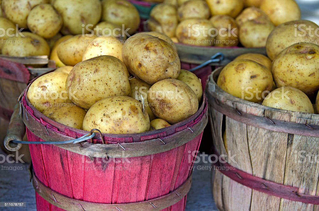Yukon Gold Potatoes stock photo