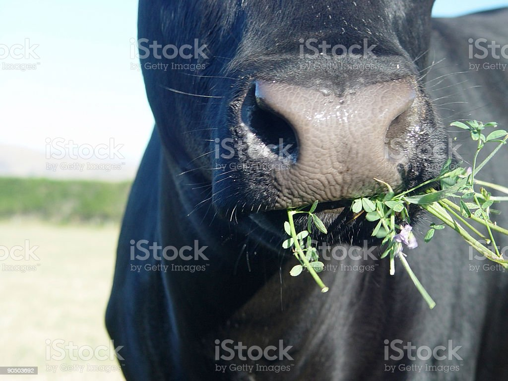 Yum Yum3 stock photo