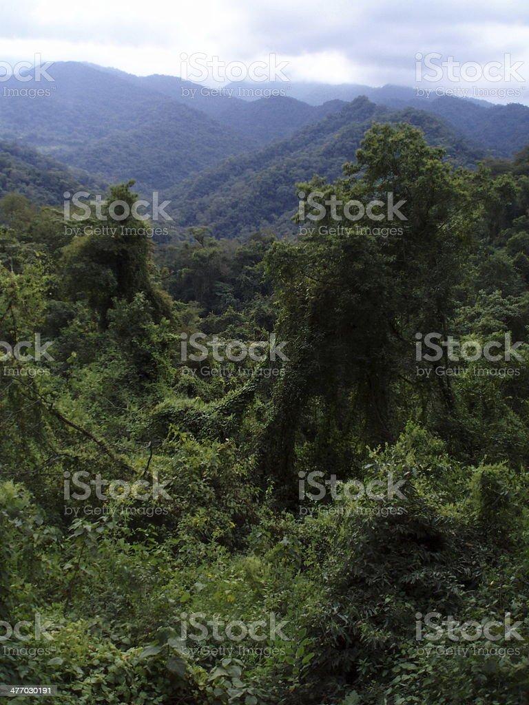 Yungas, Selva de Montaña, Jujuy stock photo