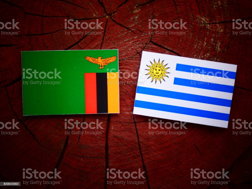 Zambian flag with Uruguaian flag on a tree stump isolated stock photo
