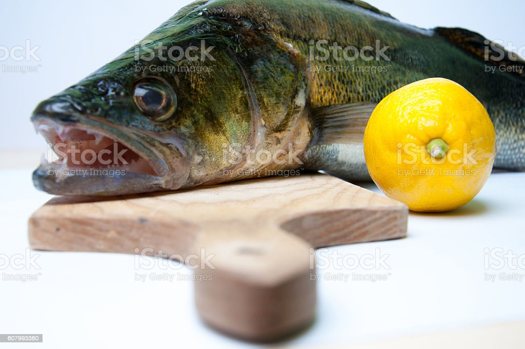 Zander ready to be cooked on white background stock photo