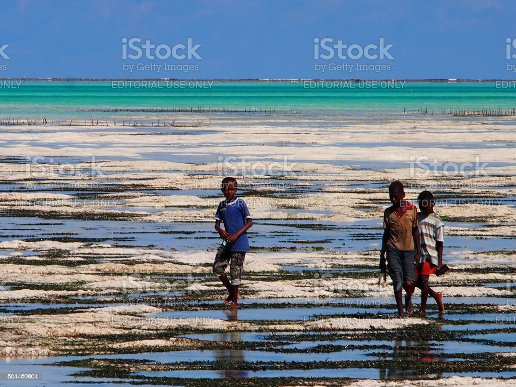 Zanzibar locals walking out to sea at low tide stock photo
