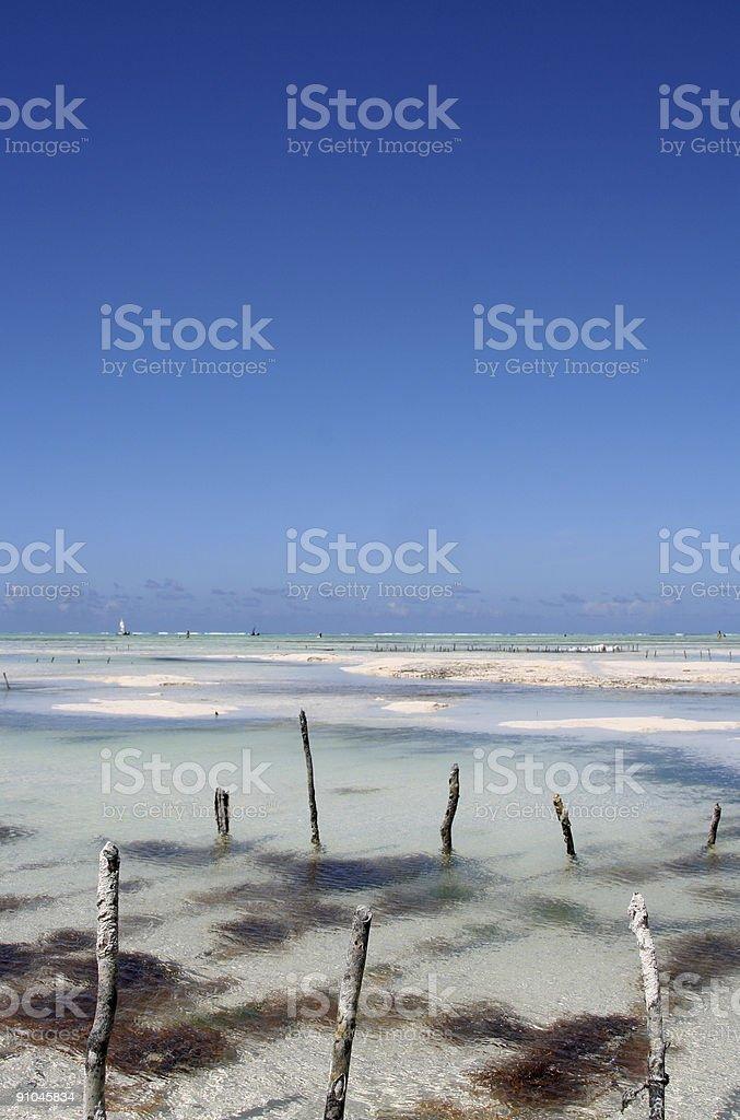 Zanzibar Seaweed Farm royalty-free stock photo