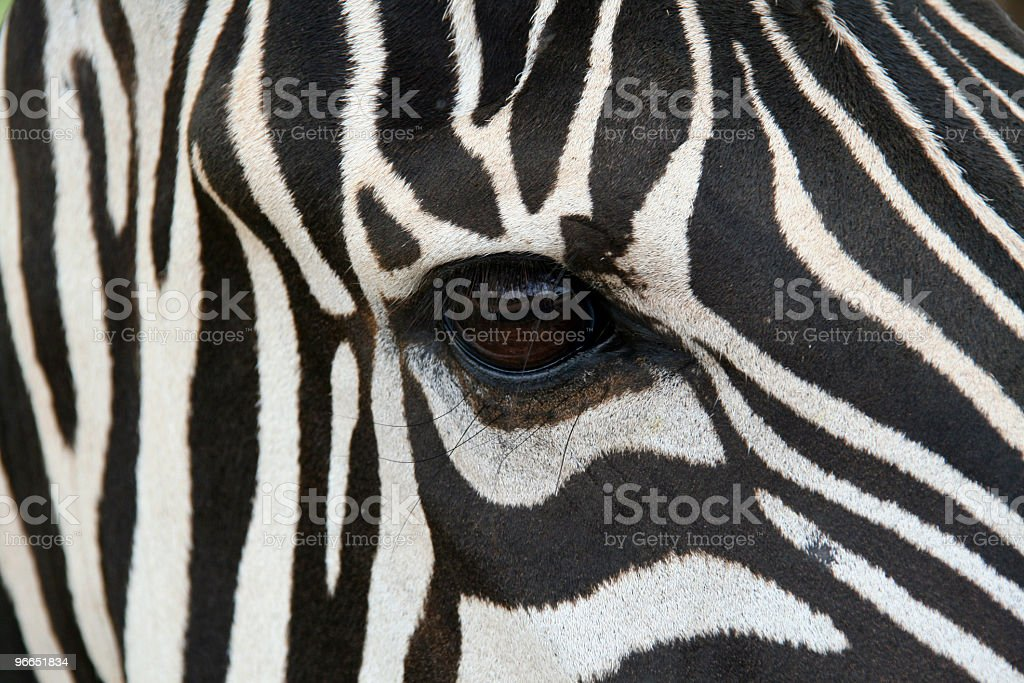 Zebra Face royalty-free stock photo
