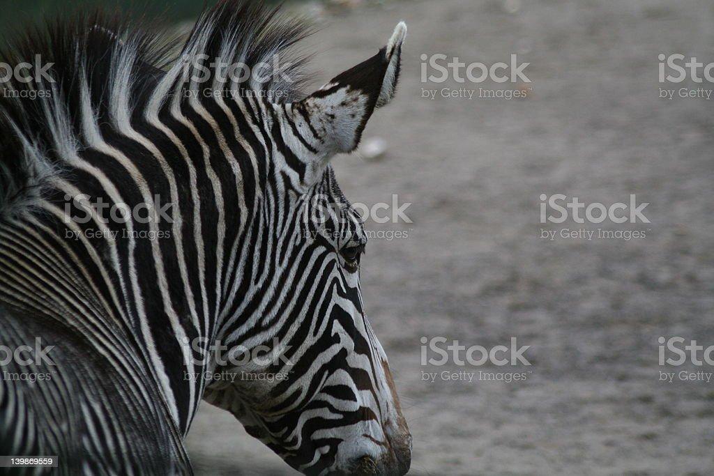 Zebra look stock photo
