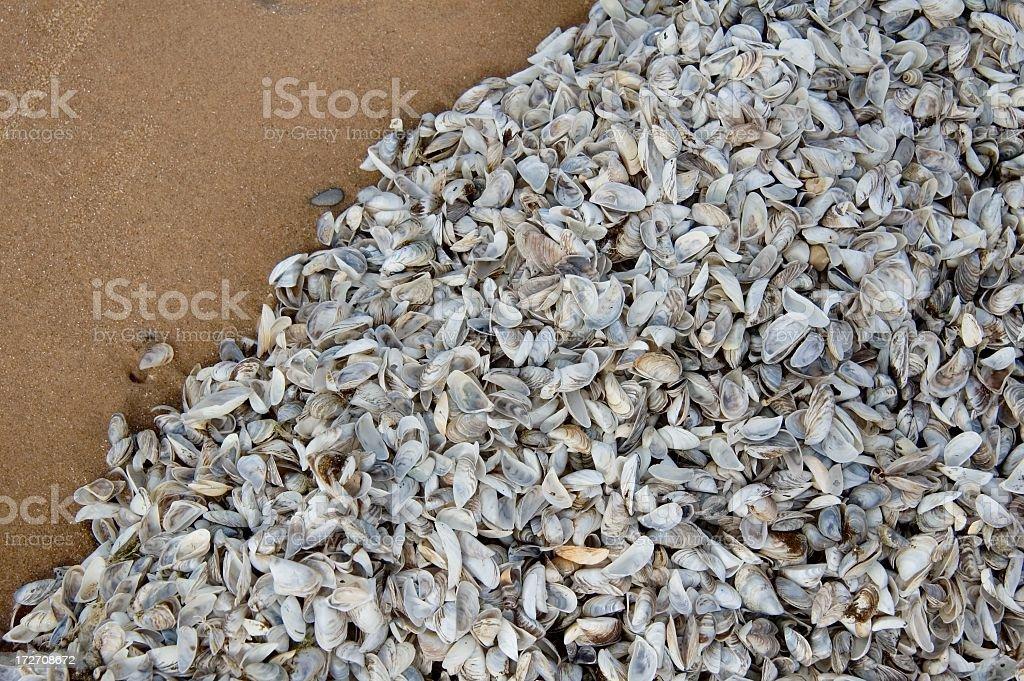 Zebra Mussels on Lake Michigan Beach royalty-free stock photo
