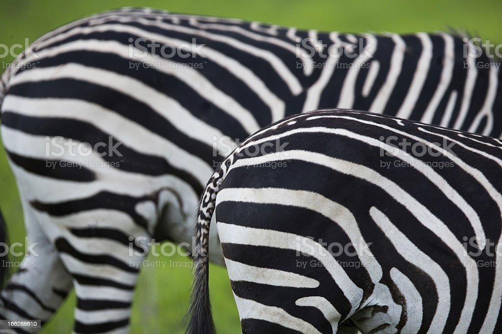 Zebra pattern royalty-free stock photo