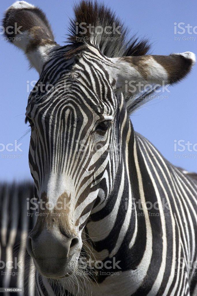Zebra Rock royalty-free stock photo