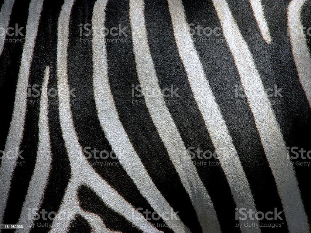zebra stripe royalty-free stock photo