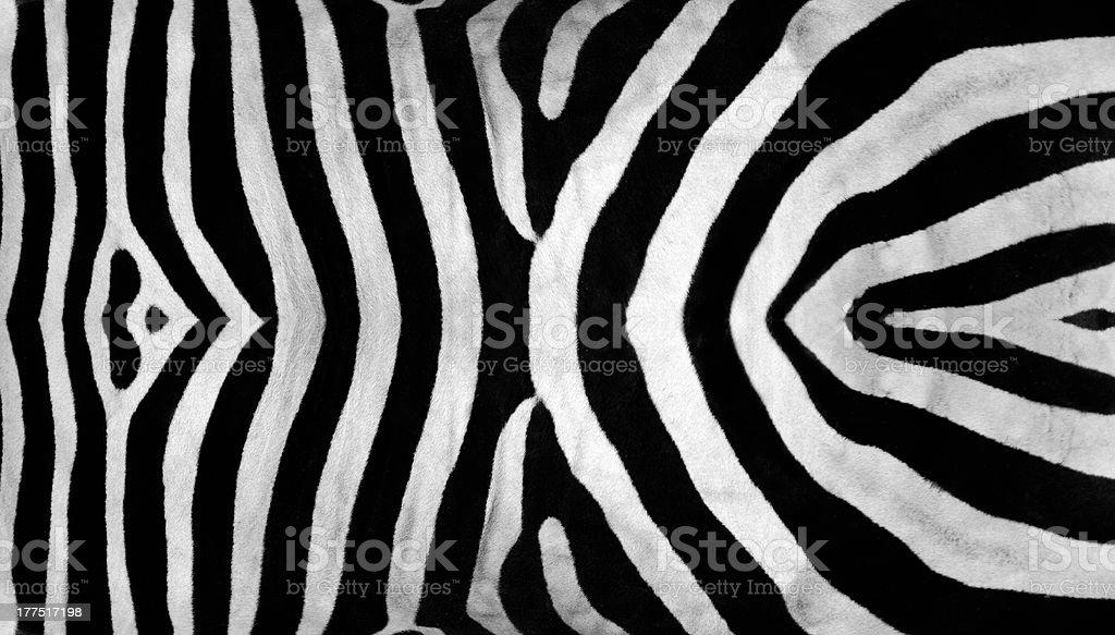 Zebra Stripes royalty-free stock photo