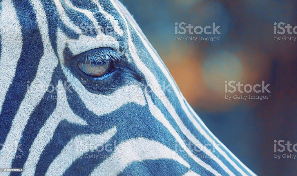 Zebraauge stock photo