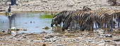 Zebras at a waterhole in Etosha Natioanal Park