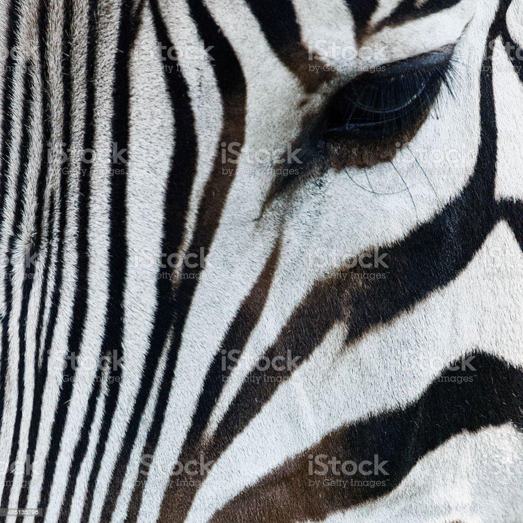Zebra's Eye Close up stock photo